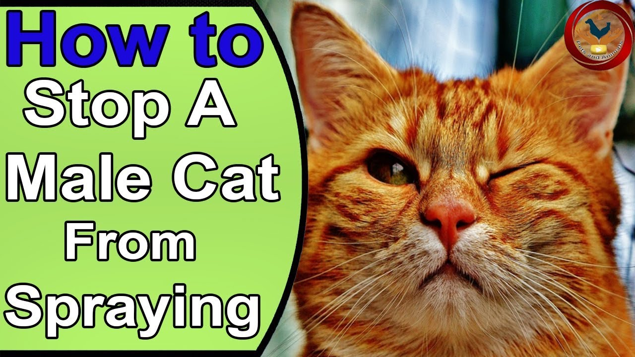 stop a cat from peeing in the house
